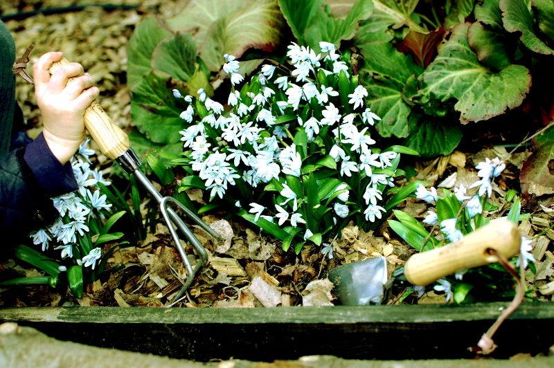 pazurki i łopatka moulton mill nierdzewne bezspawowe kwiaty