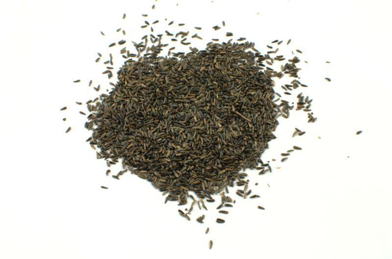 ziarno nigru olejarka murzynek mieszanki ziaren dla ptaków Semini