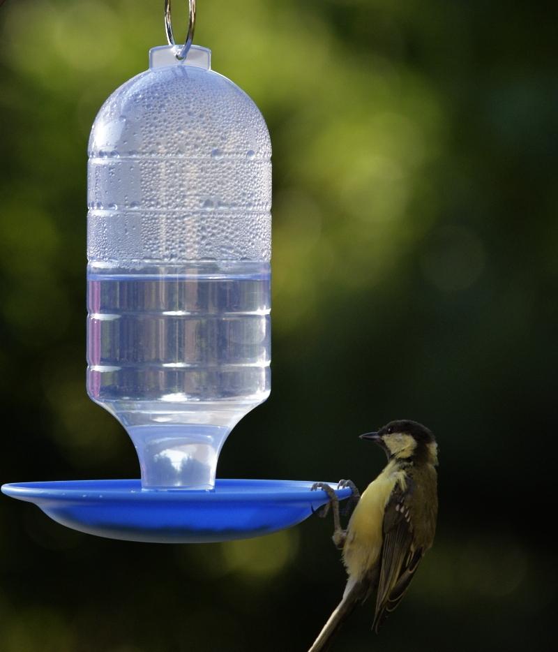 poidełko z ptaszkiem