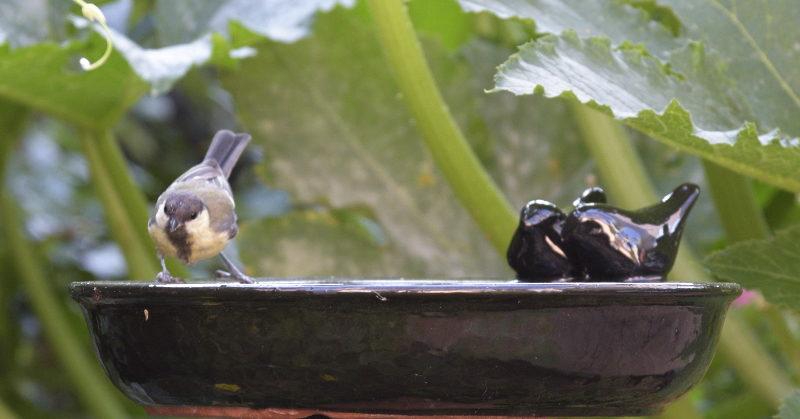 poidełko i ptaszek