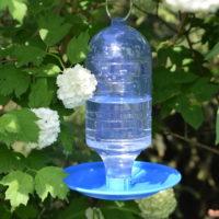 Automatyczne poidełko dla ptaków w ogrodzie