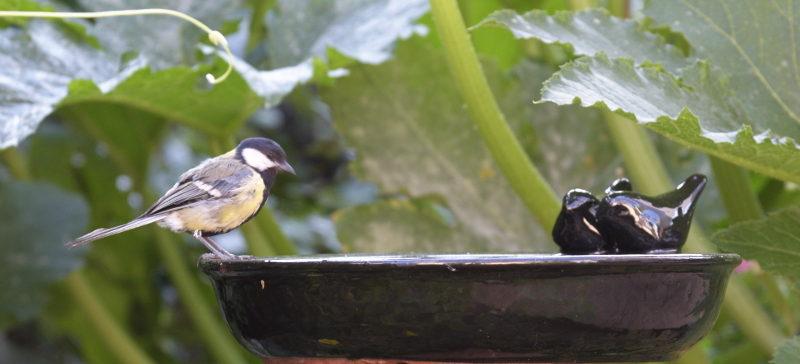 ptak na poidełku