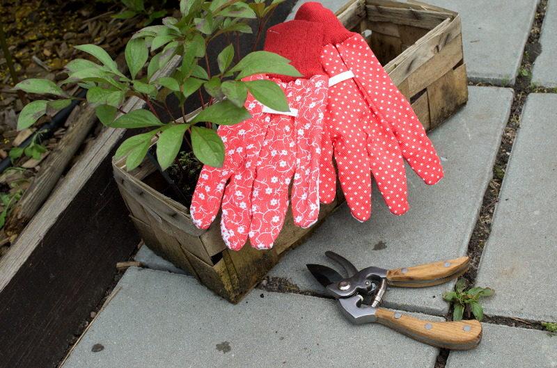 Rękawice nakrapiane do ogrodu i sekator angielski Moulton Mill