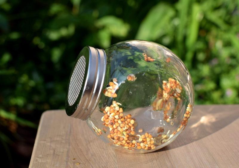 Rzodkiewka nasiona na kiełki w kiełkownicy słoikowej - dzień 2