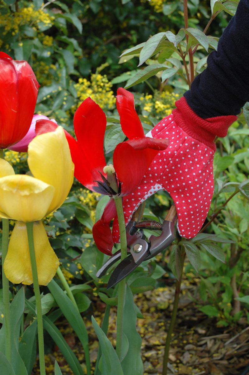 Sekator z drewnianymi uchwytami angielski profesjonalny przycina tulipany