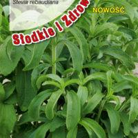 Nasiona stewii w torebce Torseed
