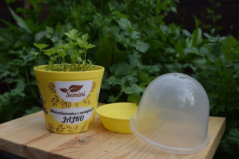 Szklarenka Jajko z pietruszką z nasion na krążku Ziołowy Zakątek