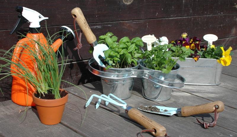 Podwójne zioła w doniczce z konewką i narzędziami