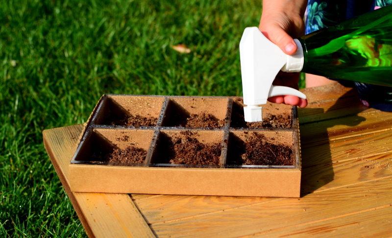 Zestaw do uprawy kwiatów jadalnych spryskanie