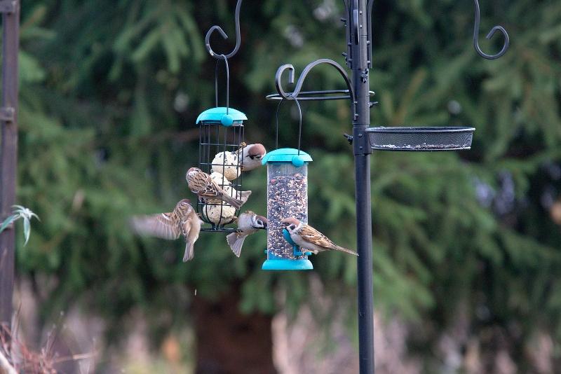Ptaki na karmnikach tubowych