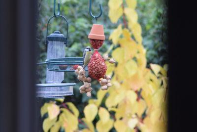 Jak podawać orzechy ptakom? Ludzik z orzechów DIY
