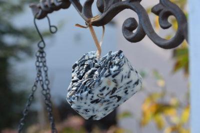 Serce z łoju i słonecznika dla ptaków zimujących w Polsce