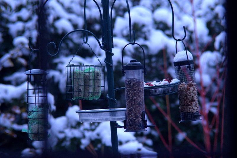 stacja dokarmiania zimą