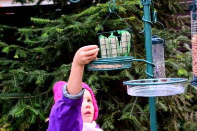 Stacja dokarmiania ptaków może być obsługiwana przez dzieci.