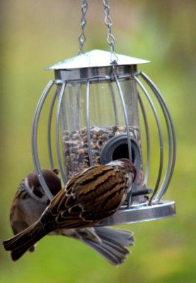 Karmnik tubowy w drucianej siatce oferuje ptakom wiele miejsc, o które mogą się zaczepić. Łatwiej skorzystają więc z niego nieco mniej sprawne manualnie gatunki, takie jak grubodzioby czy trznadle.