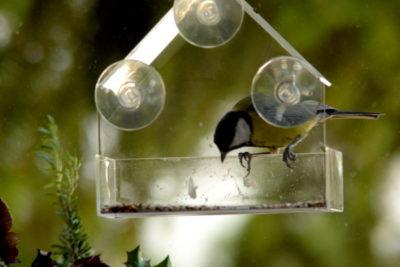 Jak dokarmiać ptaki w bloku karmnik