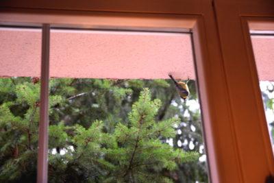 Jak dokarmiać ptaki w mieście ptaki za oknem