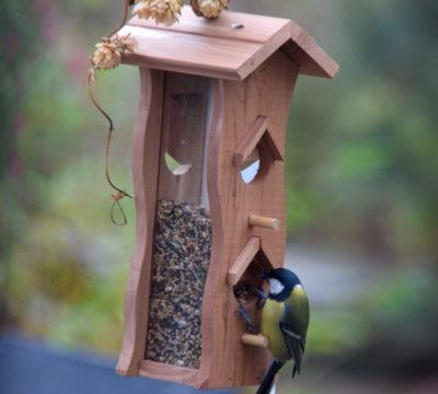 Co ptaki jedzą w mieście z dobrego karmnika?