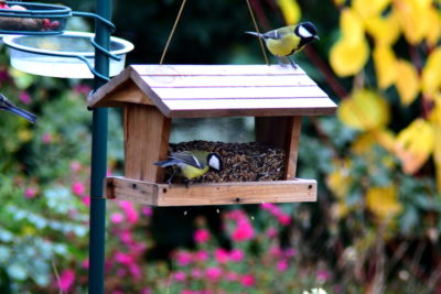 Co jedzą ptaki zimą woda i karmnik