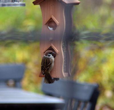 Drewniany karmnik z zasobnikiem dla małych ptaków