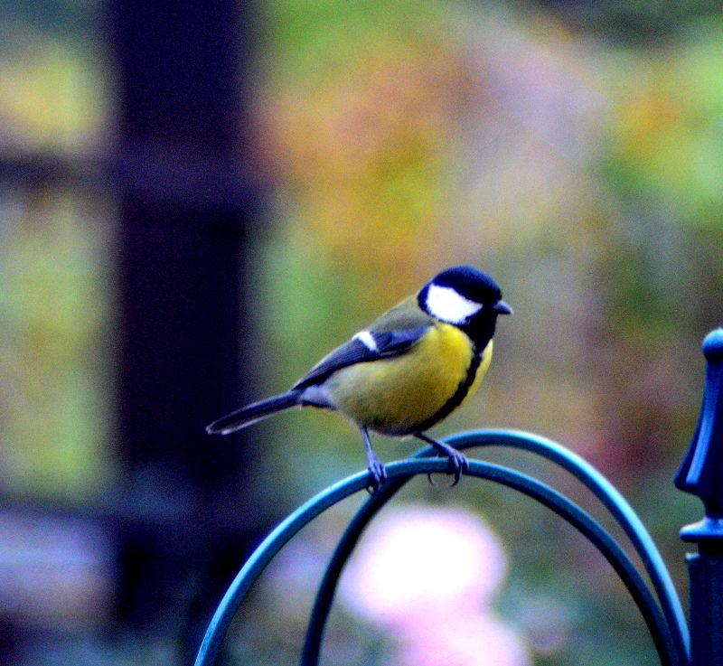 Co jedzą ptaki zimą