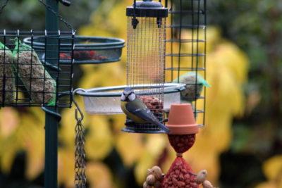 Co jedzą ptaki w mieście? Na tym wieszaku znajdą różne rodzaje pokarmu i wodę.