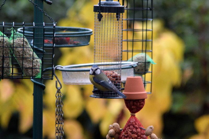 co jedzą ptaki w mieście wieszak