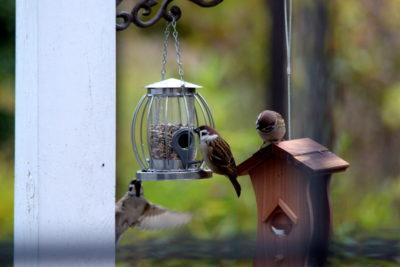 Jaki karmnik wybrać dla ptaków? Rodzaje karmników najlepszych dla ptaków