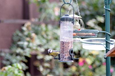 Karmnik tubowy dla sikorek i małych ptaków