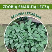 szałwia nasiona płukania na zdrowie