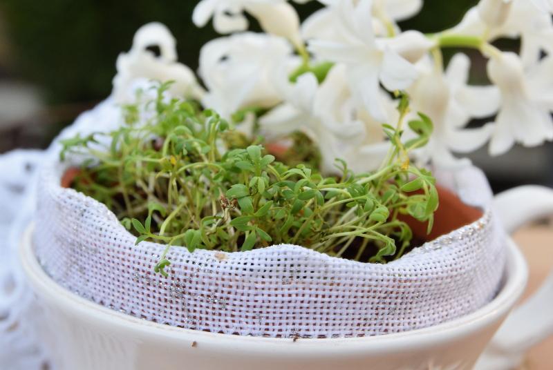 Rzeżucha na stole w bieli, która eksponuje kolor rośliny