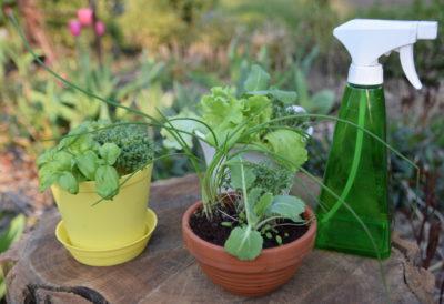 Miniogródek warzywny z rzeżuchą