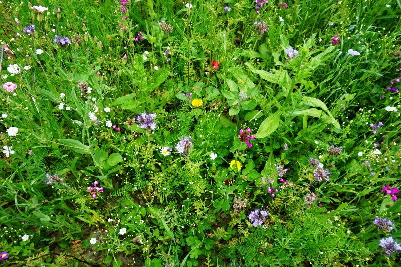byliny gleby wilgotne