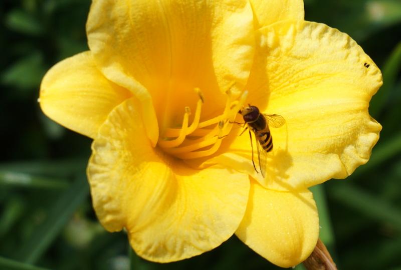 Czy środki ochrony roślin szkodzą pszczołom?