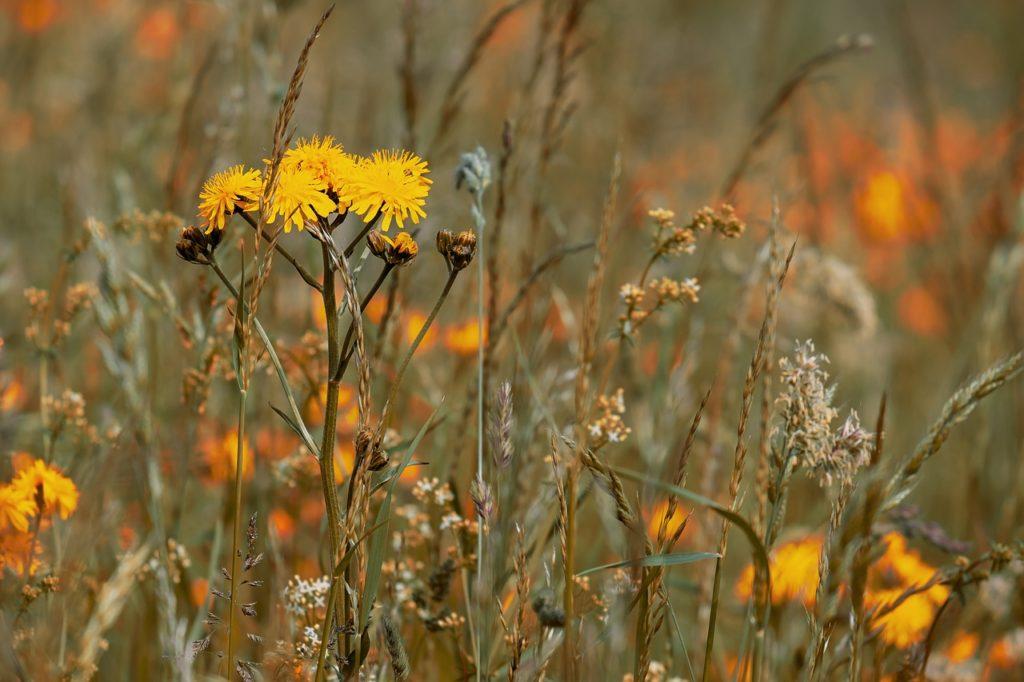 Łąka z trawami też jest ładna, ale z biegiem czasu jej miododajność spada.