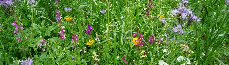 Łąka zamiast trawnika