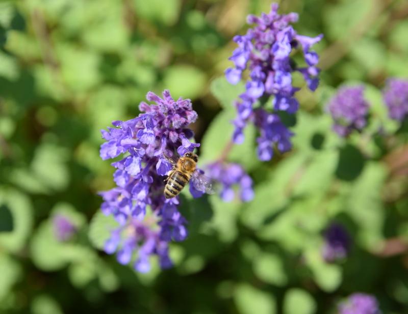 Praca pszczół jest bezcenna dla środowiska i dla nas.