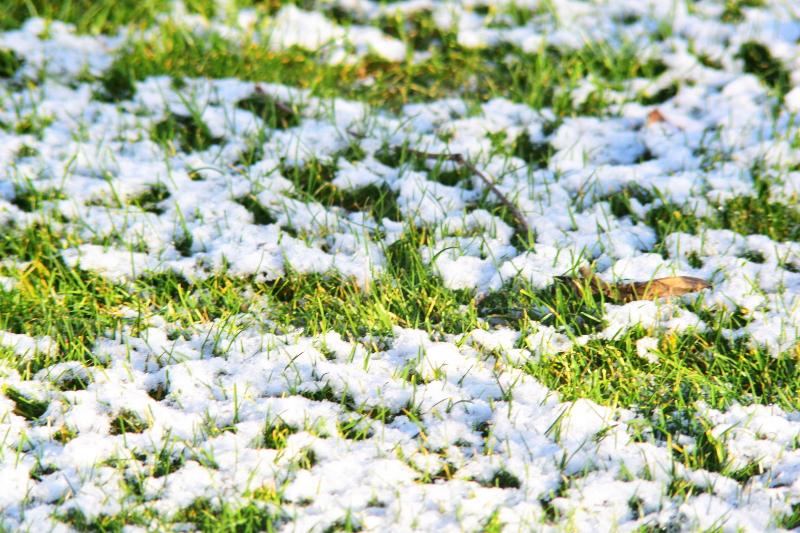 Trawnik po zimie wymaga regeneracji, dlatego wertykulator idzie w ruch!