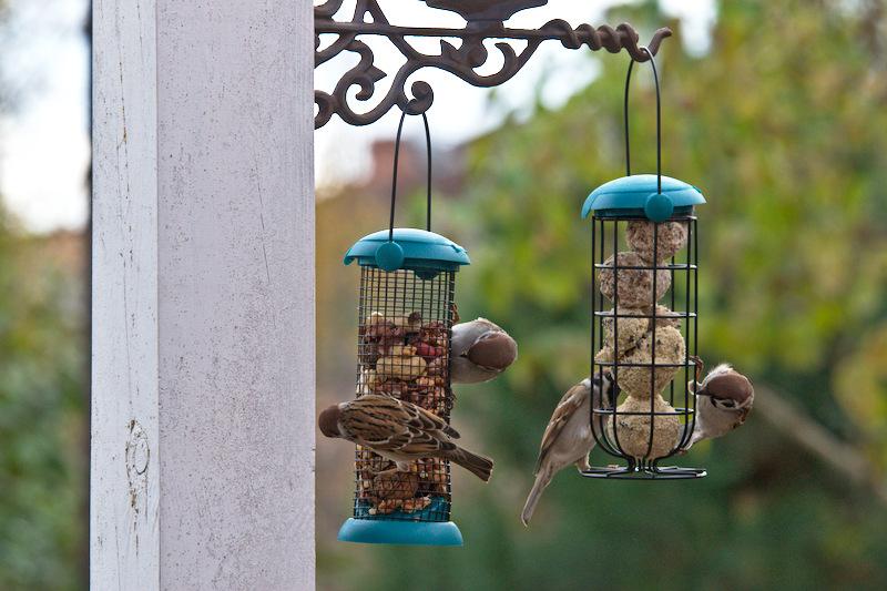 Jak zwabić ptaki do ogrodu Karmnik na orzechy i na kule tłuszczowe