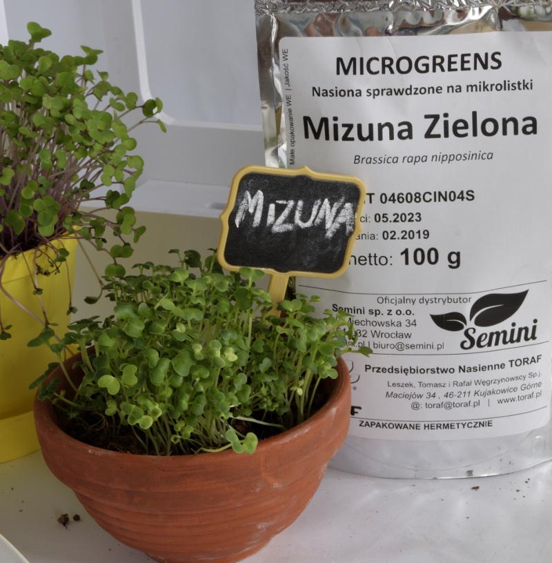 mizuna nasiona na mikroliście
