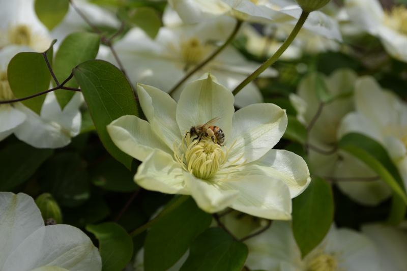 ratuj pszczoły