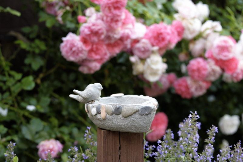 kamykowy staw w różach