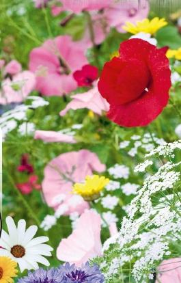 byliny na gleby suche