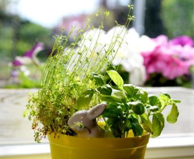 Jak wygląda dorosła rzeżucha rosnąca w ziemi?