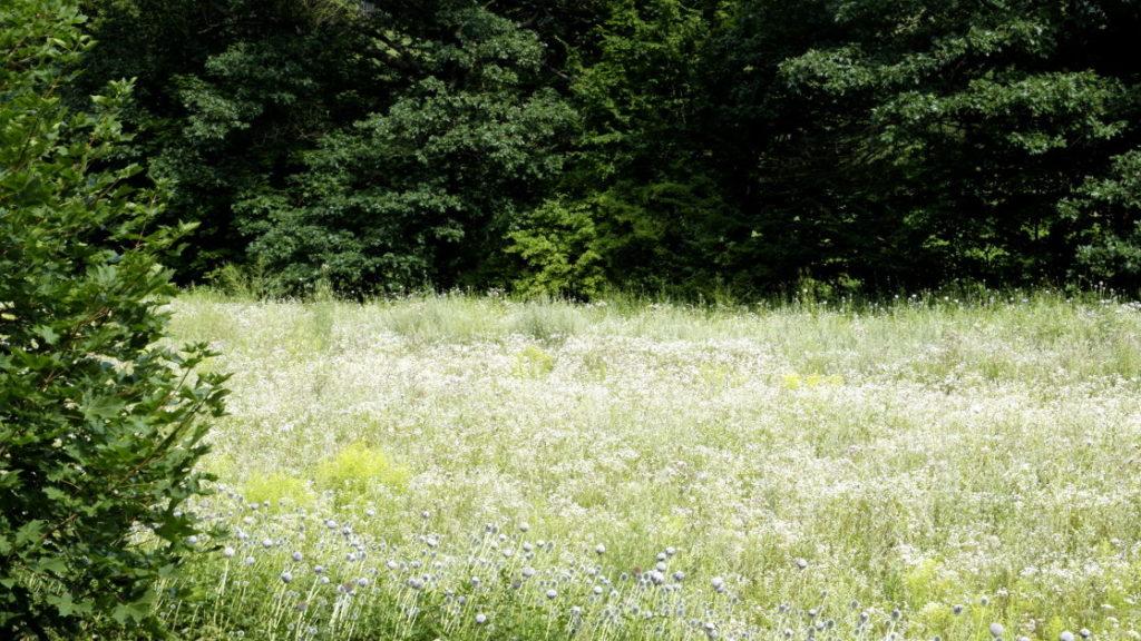 Łąki na terenach podmokłych 2