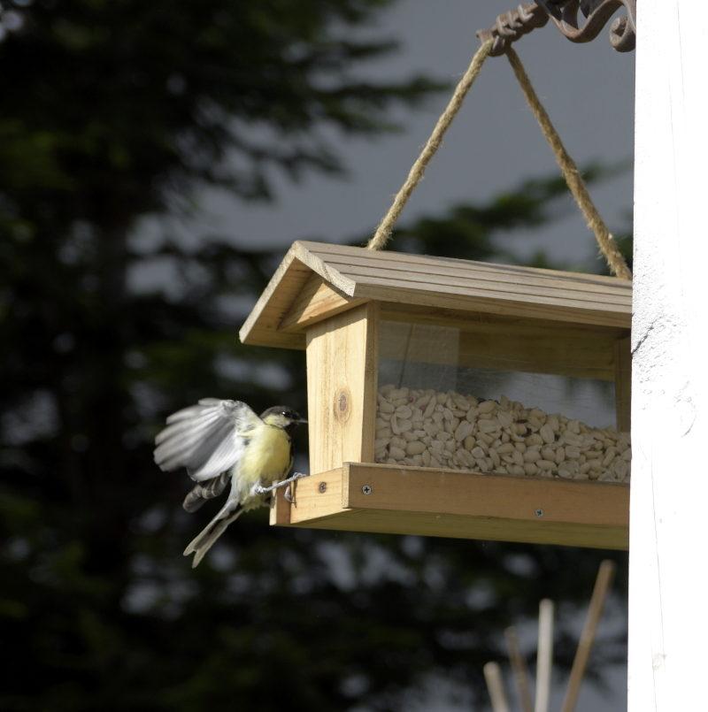 Czy trzeba dokarmiać ptaki?