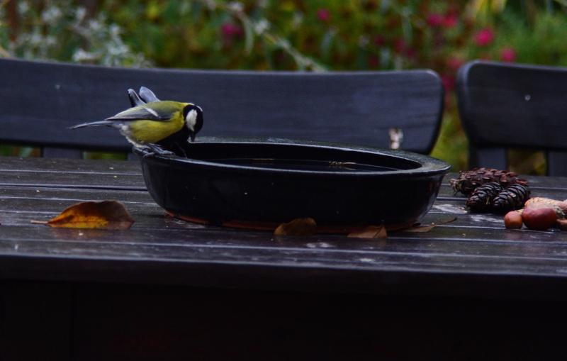 Czy ptaki piją wodę? 2