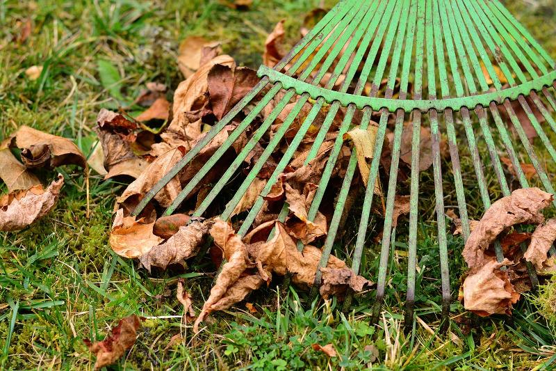 liście jesienią z trawnika trzeba zgrabić