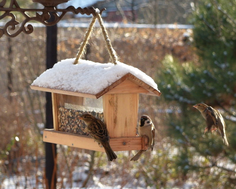 Ptaki dzikie zimą