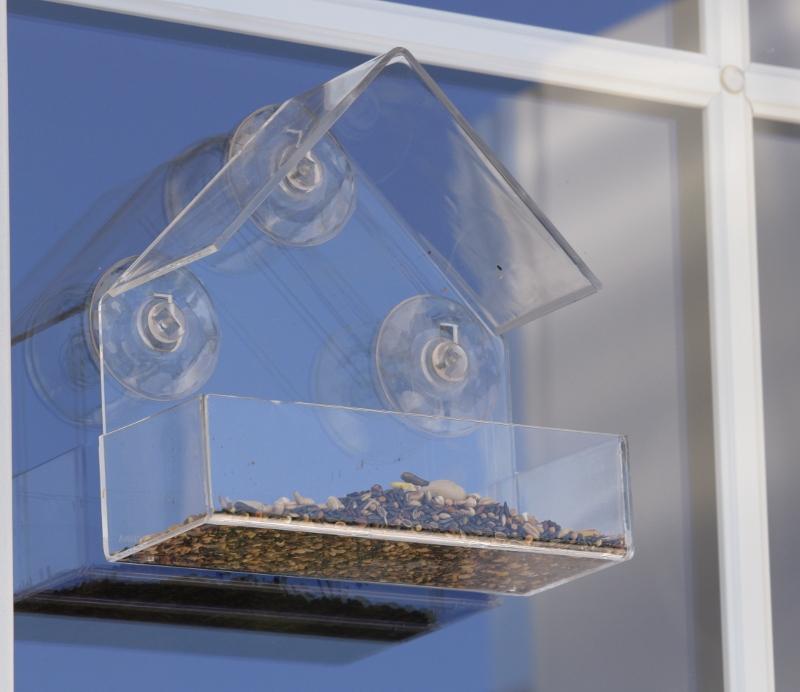 Jak przyciągnąć ptaki do okna